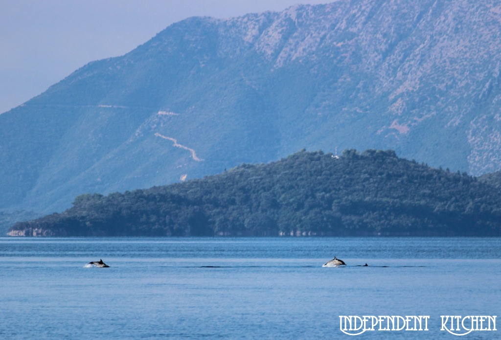 Wild Dolphins in Greece